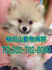植田山動物病院052-782-8080